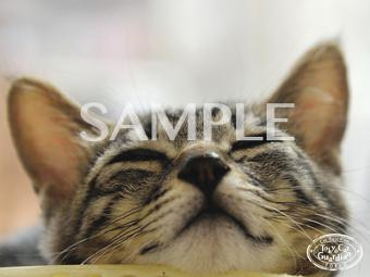 壁紙 画像 可愛い 猫